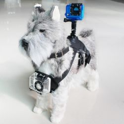 imbracatura per animali domestici con supporto per fotocamera sportiva nero bigbuy sport